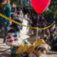 fort greene's great pupkin dog halloween costume contest rescheduled