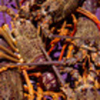 Dozens of crayfish poached from marine reserve in Gisborne