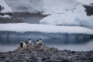 Plan For World's Largest Nature Reserve In Antarctica Blocked By Russia, China, And Norway