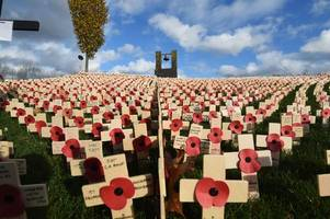 wonderful remembrance day pictures that will make you proud to be from the west midlands