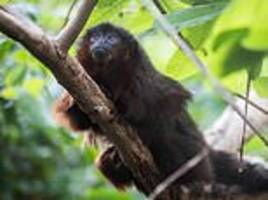extinct sloth-like monkey species 'unlike any primate on earth' analysed in new study
