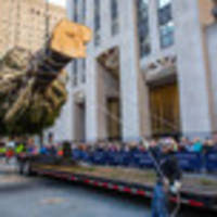correction: the annual rockefeller center tree slaughtering is actually delightful