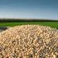 frozen out of china: american farmers refuse to sell their soy