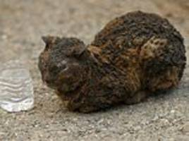 heartbreaking images show animals injured in california wildfires that has killed at least 44