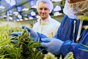 here comes the cannabis producer tilray... (tlry)