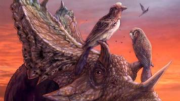 Rare Bird Fossil Discovered in Museum Storage