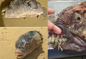 25 monstrous finds from one russian deep-sea fisherman