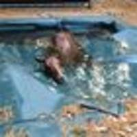 heartbreaking plight of california's animals - including the horse that got caught in a pool