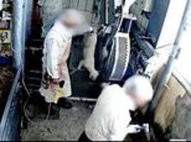 Scandal at a Spanish slaughterhouse: Covert CCTV reveals animal rights abuses