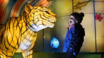 in pictures: edinburgh zoo lights up with giant lanterns