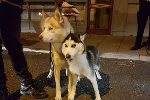 police find two beautiful stray dogs in derby city centre