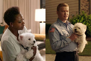 meet olivia, the cute dog who starred in both 'widows' and 'game night' this year