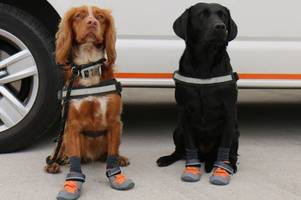 bristol dogs join fire service to help search for casualties