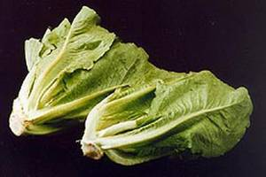 CDC Warns Consumers Not To Eat Romaine Lettuce After Year's Second E. Coli Outbreak