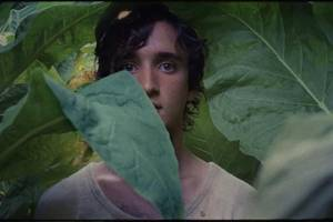 'happy as lazzaro' film review: alice rohrwacher charts the course of a holy fool