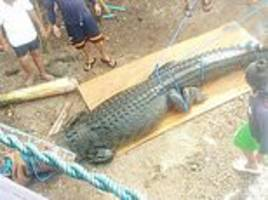 'killer' croc captured in philippines and will have the contents of its stomach checked for victim