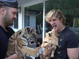 logan paul tiger video leads to animal abuse and illegal possession charge for california home man