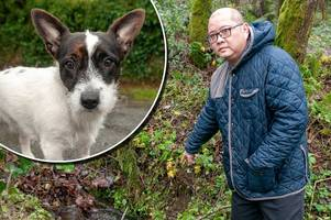 dog and owner sucked down drainage pipe in horrifying ordeal in devon woods