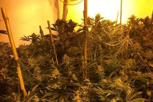 Police close £100,000 'fire risk' cannabis house in Narborough Road, Leicester