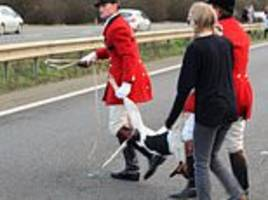 saboteurs film horrifying moment a hound is killed after car smashed into it during hunt