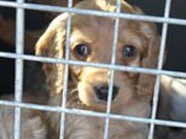 Animal shelters in Germany ban adoptions in the run-up to Christmas to stop pets being dumped
