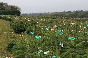 you can rent a real christmas tree from this leicestershire company - and have the same one next year