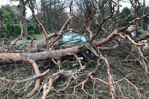 egham father 'lucky to be alive' after massive tree crushes passing car