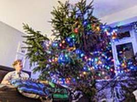 tree-mendous! inventive father-of-two cuts 26ft festive fir into three so it pokes through his roof