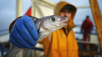 Brexit: MPs 'disappointed' with inquiry into future of fishing in NI