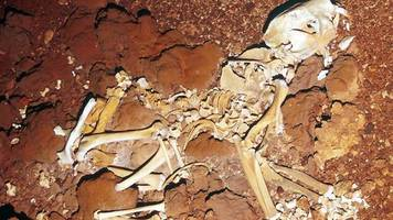 Researchers Piece Together Ancient 'Marsupial Lion' Skeleton