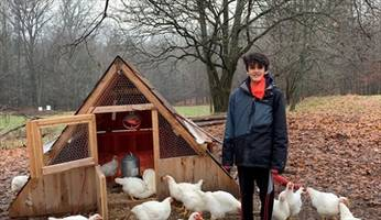 celebrating a vegan christmas: ancaster boy saves chickens from the dinner table:birds donated to livestock animal sanctuary