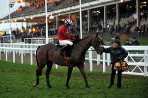 'he's been a most wonderful horse for us'- the new one retires on an emotional day at cheltenham