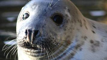 seal pups 'at risk from toxic chemicals in contaminated water'