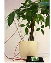 IIT researchers show how plants can generate electricity to power LED light bulbs