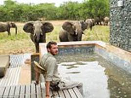 safari ranger is crushed to death by sexually charged bull elephant at south african game lodge