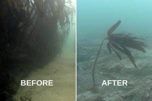 Reef devastated by Kuzma Minin off Falmouth could take years to recover