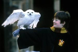 harry potter star daniel radcliffe sitting on £76million fortune thanks to wizard profits