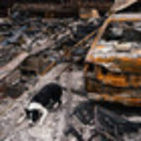 trained dogs work to recover urns lost in california's wildfire