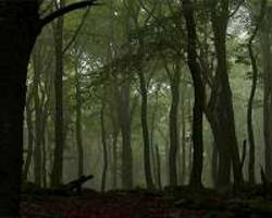 these nine measures reveal how forests are controlled by climate