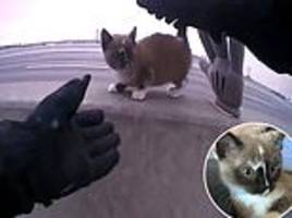 adorable kitten accidentally turns on police siren after cop rescues it