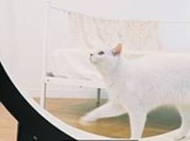 a smart treadmill for your cat: firm debuts intelligent personal trainer with leds to coax your pet