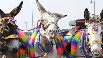 blackpool donkeys' winter holiday home reprieved