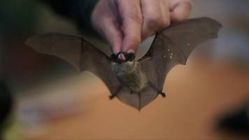 would you give bats a home in your fridge?