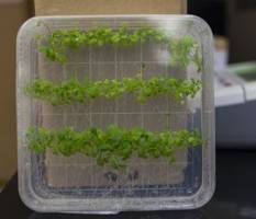 Researchers Found the Blueprint for Plant Immune Systems