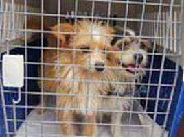 South Korean animal rights group 'killed hundreds of dogs and then listed them as adopted'