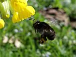 city gardens have become havens for bees driven off farm land by pesticides and lack of flowers