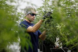 Cannabis producer Canopy Growth pops after receiving a license to process hemp in New York (CGC)
