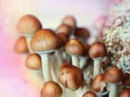 dying patients to be given magic mushrooms in a revolutionary trial at a melbourne hospital