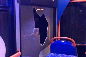 stagecoach boss speaks out over hull gangs repeated bus attacks