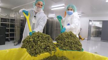 canadian cannabis producers are breaking into the us market, causing millennials to snap up their shares (cgc, tlry, cron, acb)
